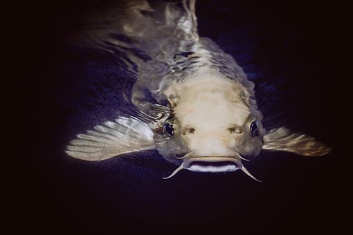 5 Important Facts To Know About Catfish