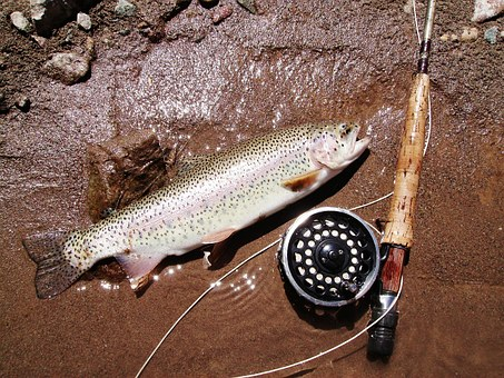 Trout Fishing Tips For Beginners Into Angling