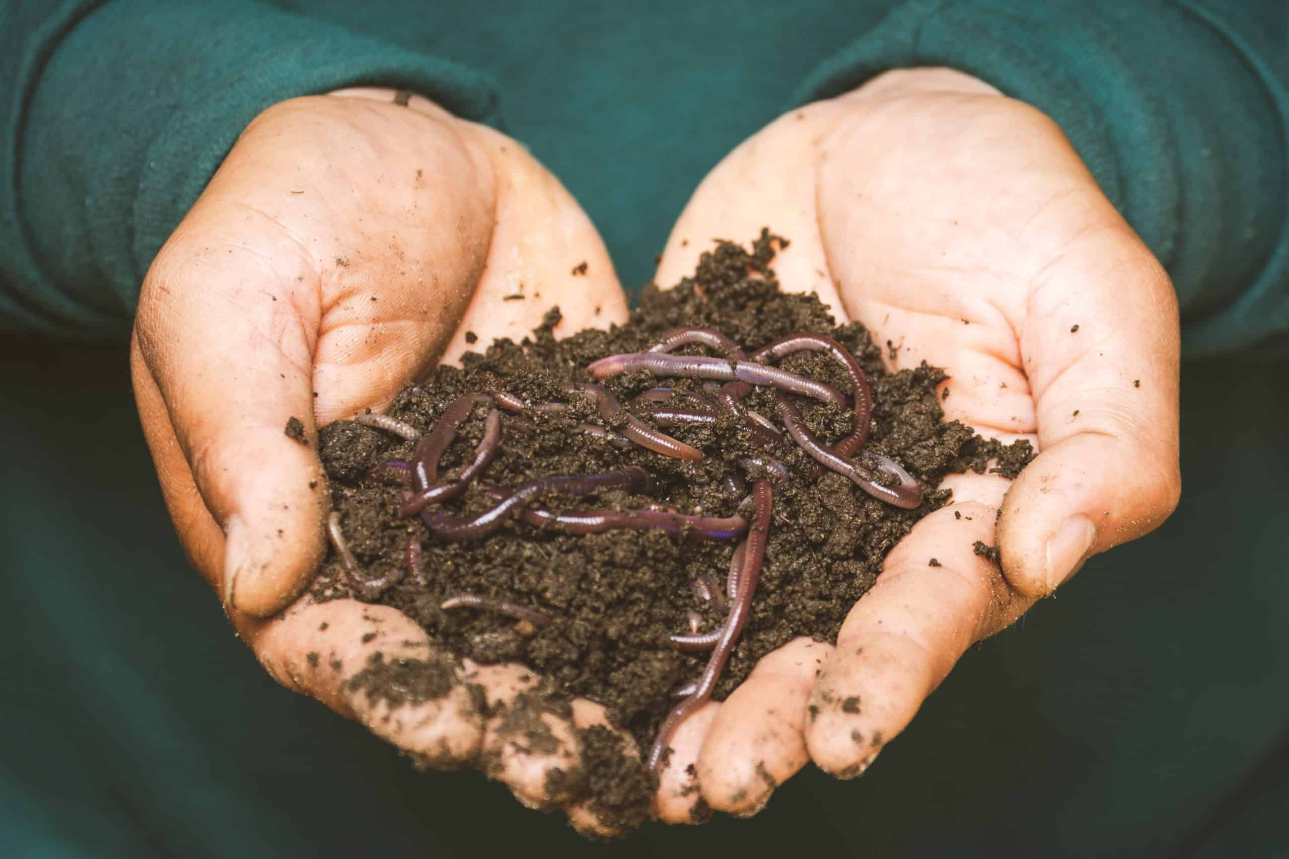 The Best Baitworms Fishing: Selection, Presentation, and Storage