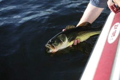 Fishing For Bass Tips For new anglers