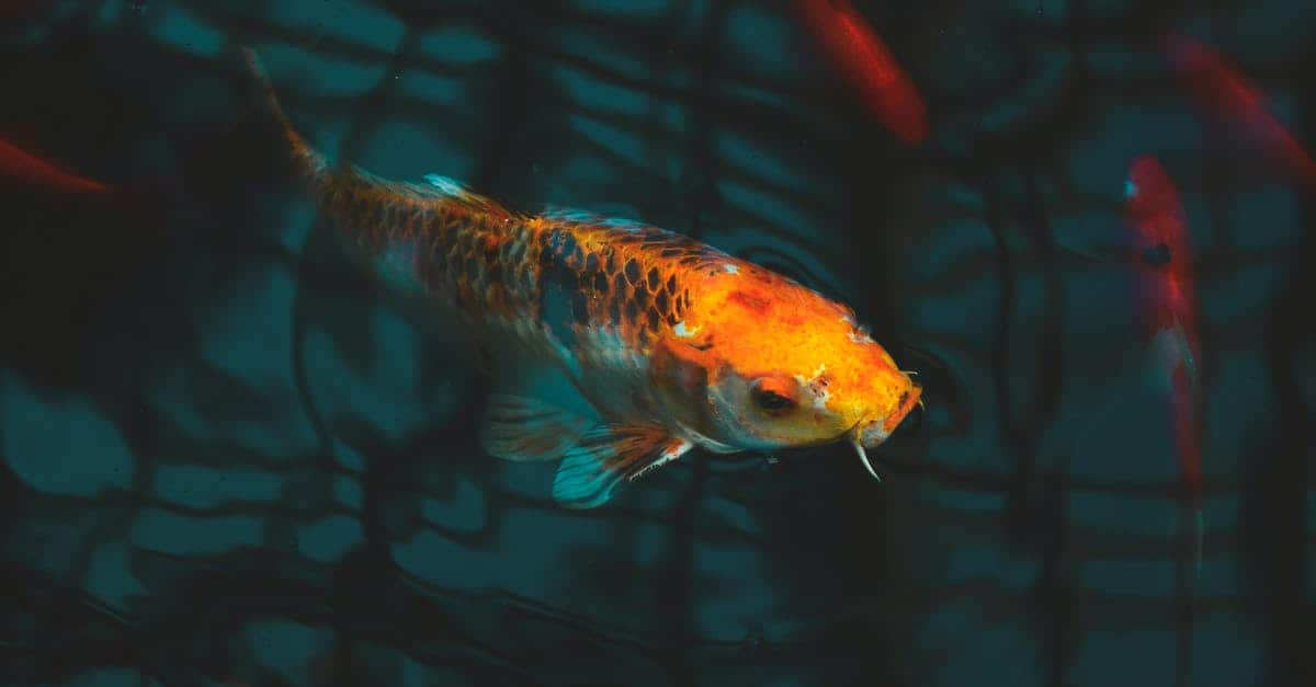 A fish swimming under water