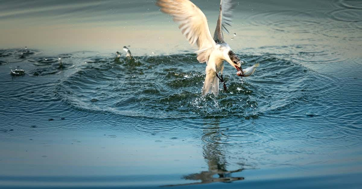 A bird swimming in water next to a body of water