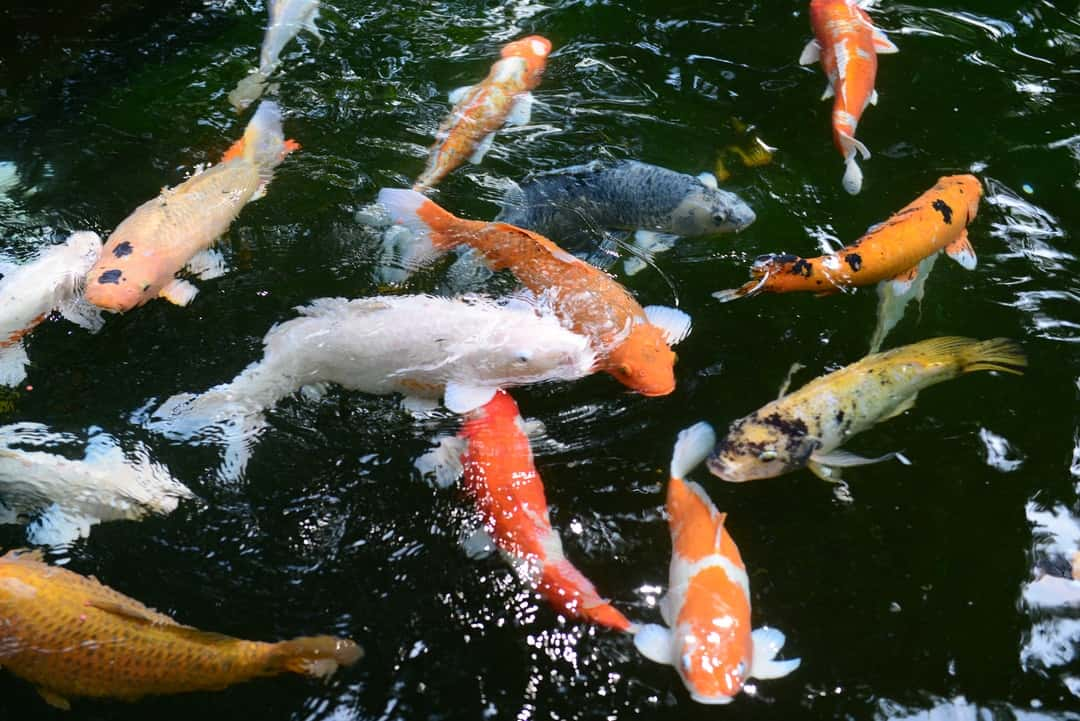 A group of fish in the water