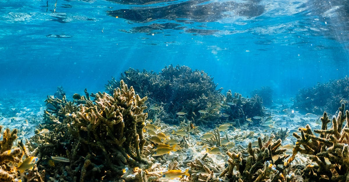 Underwater view of the water
